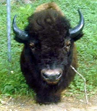 Buffalo st