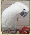 Cockatoo_umbrella_australia